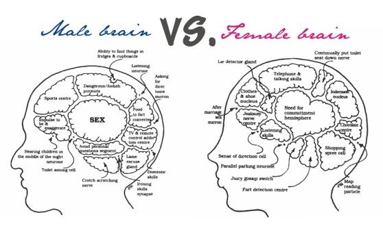 Fe-male brain